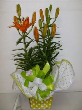 Belo Orange