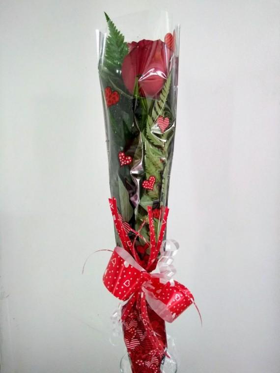 Rosa Presente