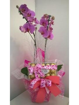 Orquidea Phalaenopsis com Ferrero
